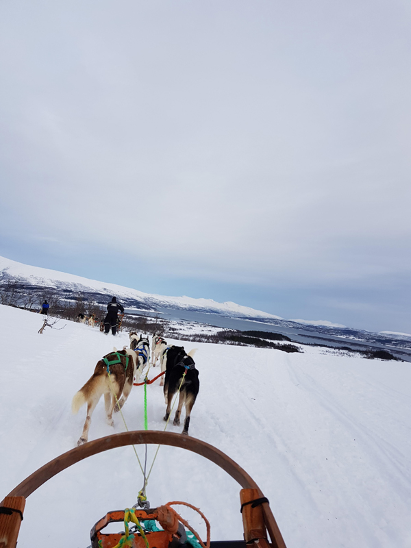 danny young dog sledding in Norway low res