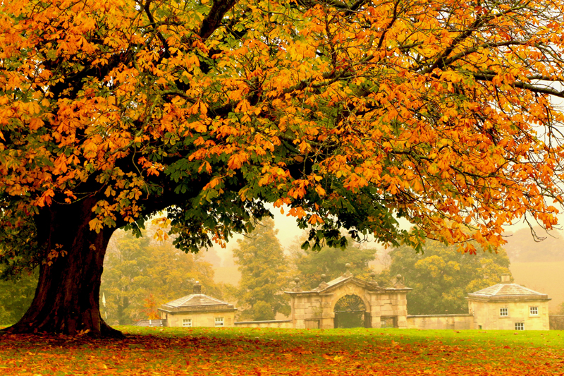 Swinton Park Autumn by Echo YIN low res