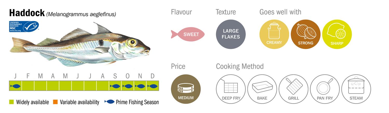 Haddock Seafood Species Descriptor Graphic low res