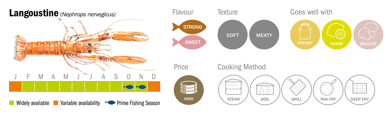 Langoustine Seafood Species Descriptor Graphic low res