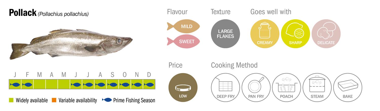 Pollack Seafood Species Descriptor Graphic low res