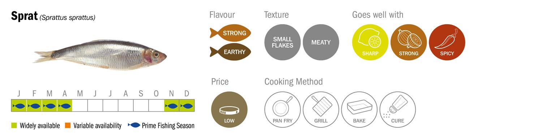 Sprat Seafood Species Descriptor Graphic low res
